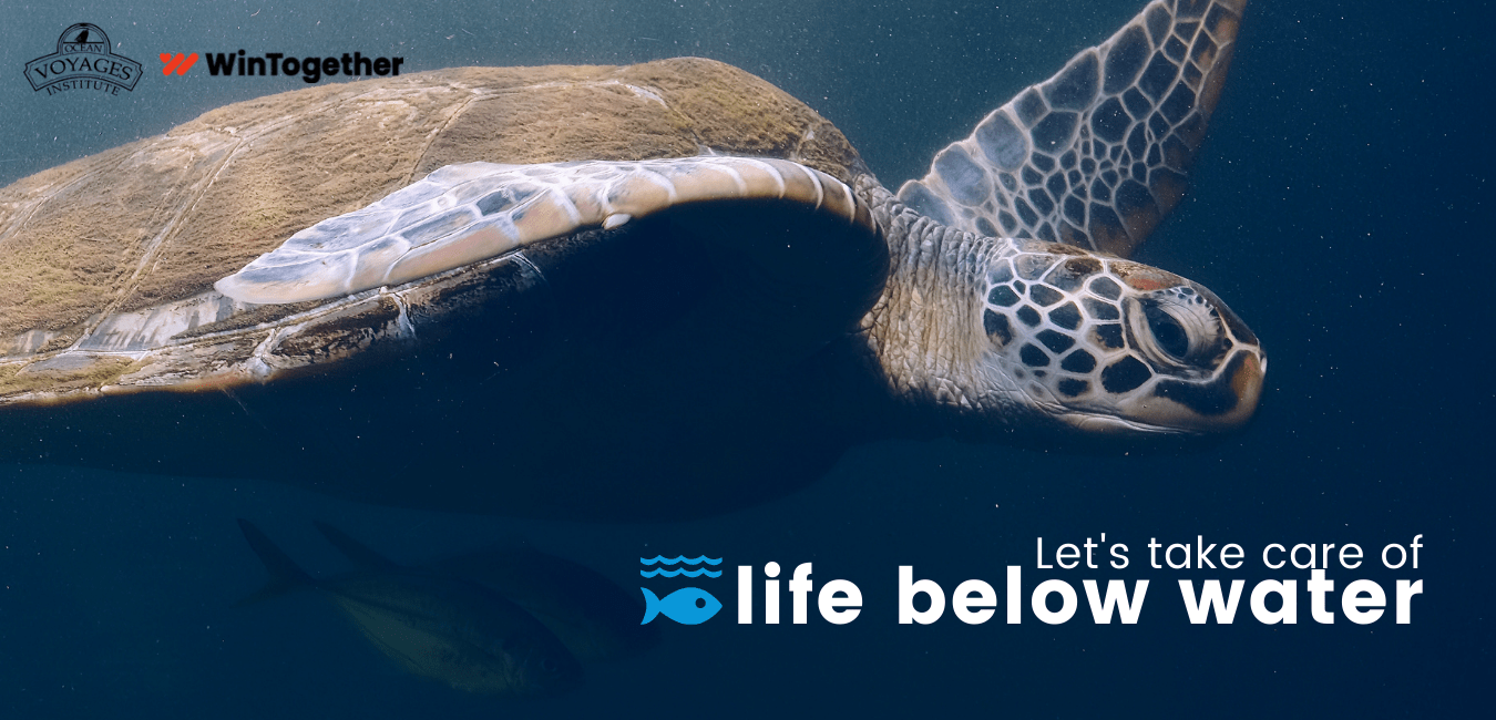 Let's Take Care of Life Below Water
